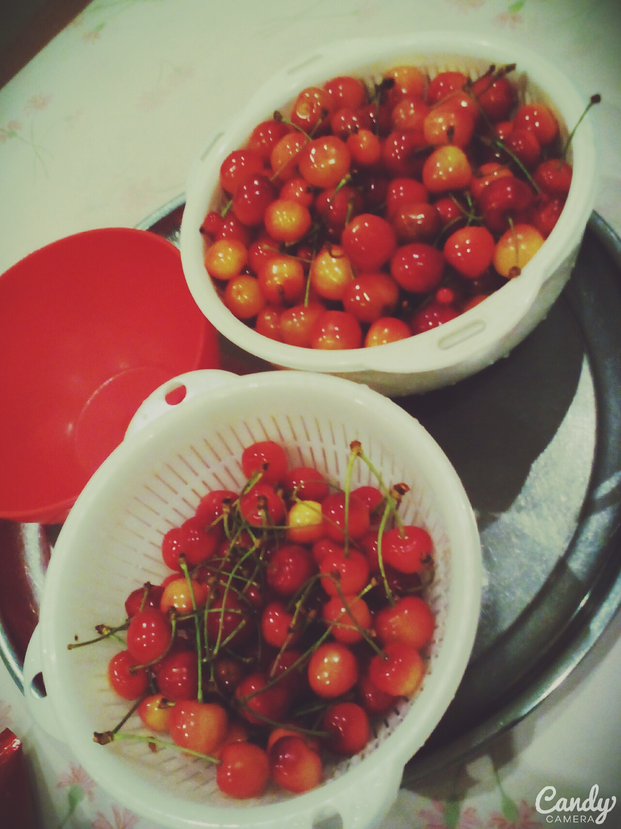 日本のさくらんぼ   日本的櫻桃